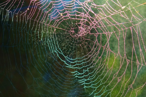 spider-web-615272_1920